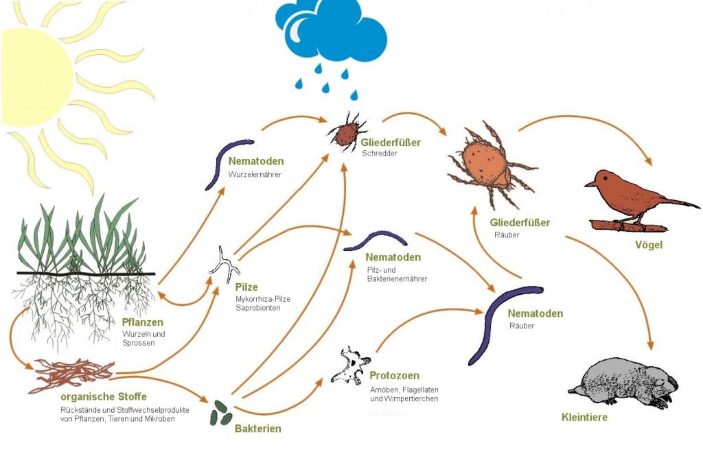 Nahrungsnetz im Boden